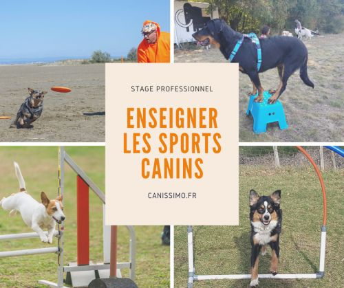 1 Enseigner les sports canins