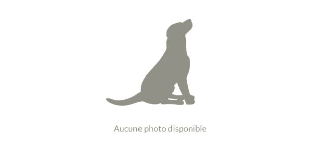Chien de race Bearded Collie trouvé à Labergement-Foigney | Dpt. 21